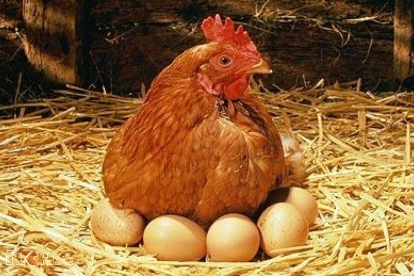 Kümes Hayvancılığı Üretimi Azaldı