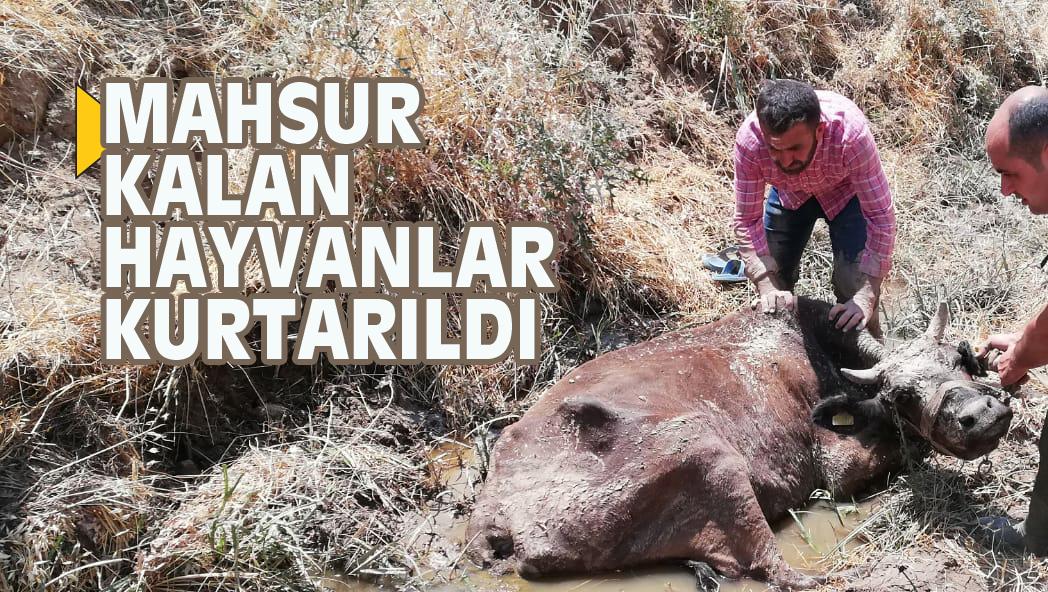MAHSUR KALAN HAYVANLAR KURTARILDI