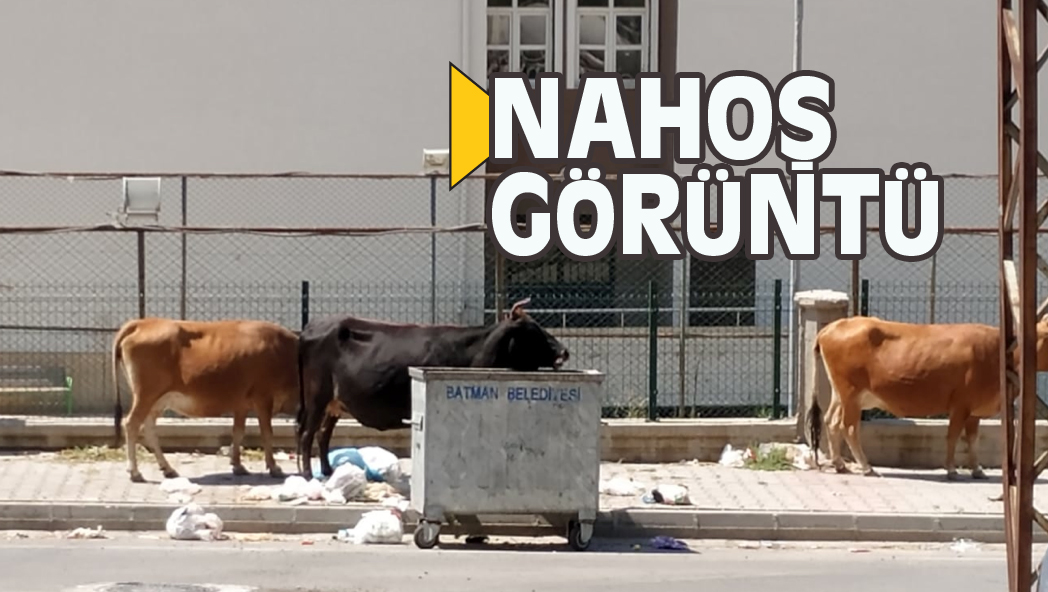 NAHOŞ GÖRÜNTÜ