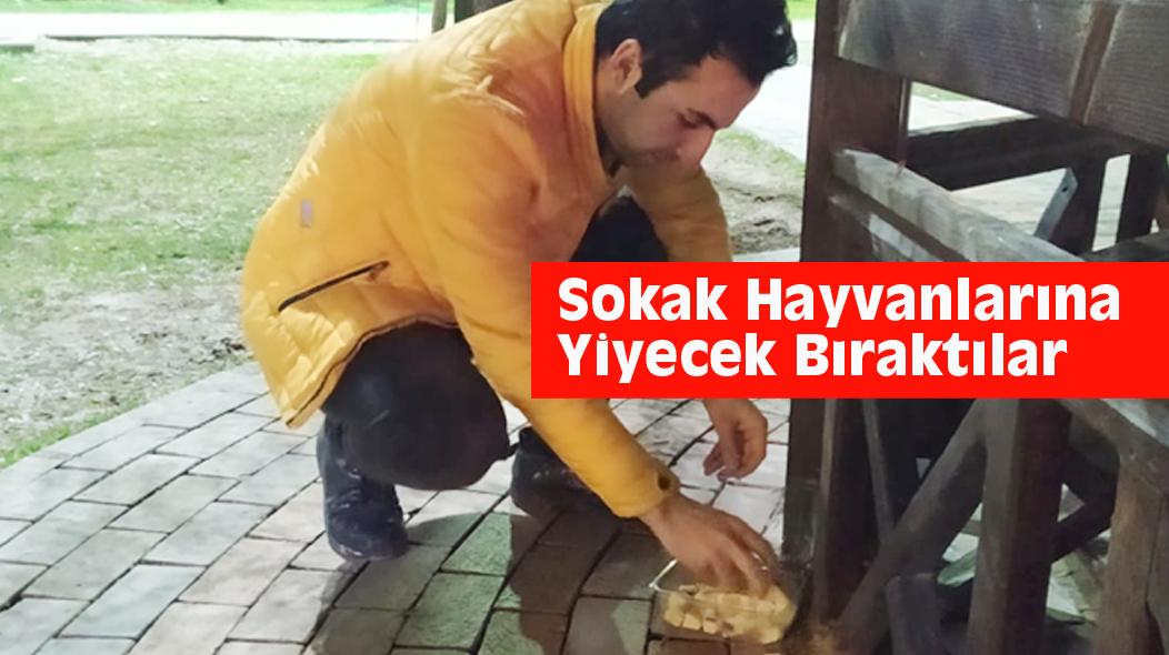 Sokak Hayvanlarına Yiyecek Bıraktılar