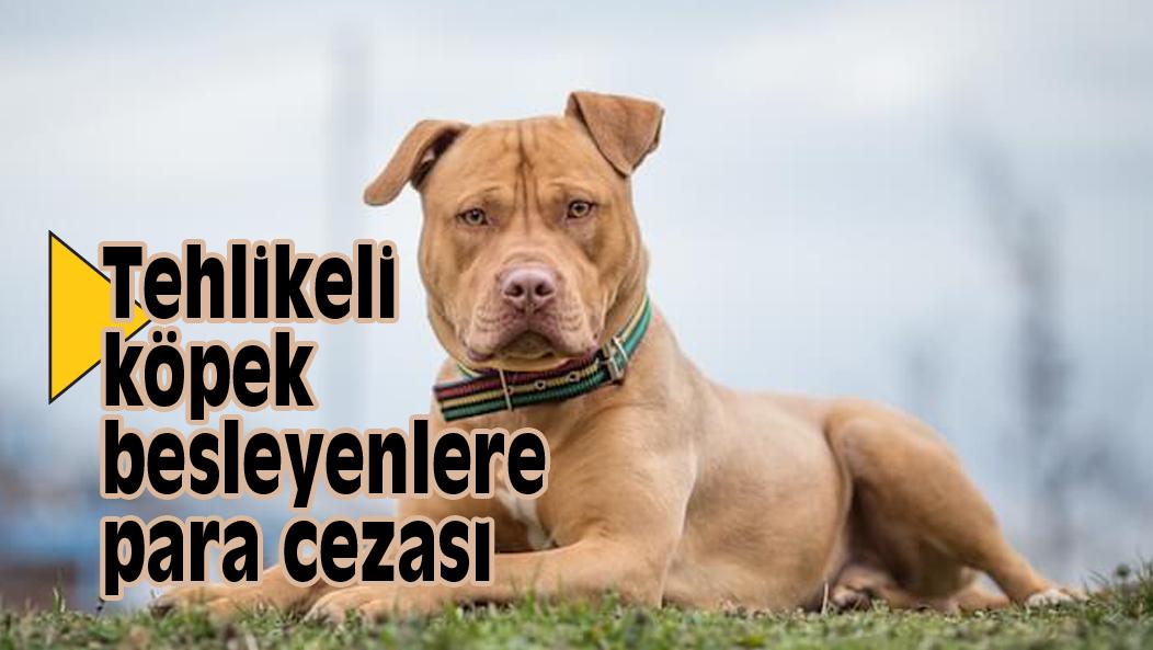 Tehlikeli köpek besleyenlere para cezası